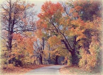 Fall Foliage in the Cherokee Mountains